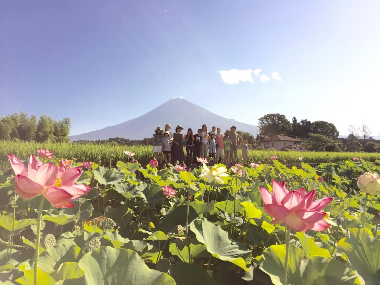 Mt. Fuji, Lotus flowers and people